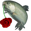 Rainbow trout Rose.png