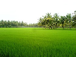 East Godavari district - Wikipedia, the free encyclopedia