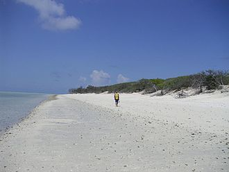 Capricorn and Bunker Group - North West Island shoreline