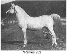 Gray horse with heavy white hair coat, probably taken late fall or winter