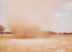 Tal Chhapar Sanctuary - Dust devil