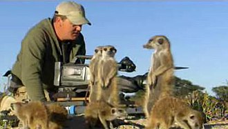Meerkat Manor - Robin Smith finds himself surrounded by foraging meerkats while filming them