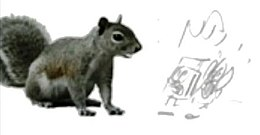 Sitting squirrel and pencil sketch