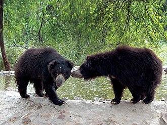 International Animal Rescue - Image: Bear rescue sanctuary