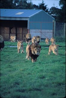 Cars For Free >> Blair Drummond Safari Park - Wikipedia