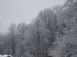 Types of snow - Snow on trees in DuBois, Pennsylvania.