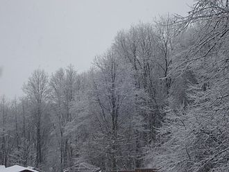 Types of snow - Snow on trees in DuBois, Pennsylvania.
