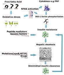 pathophysiology of hepatitis b pdf