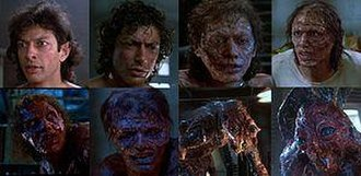 "The Fly (1986 film) - The different stages of Seth Brundle's gradual transformation into ""Brundlefly"""
