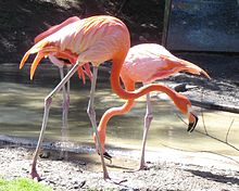 Columbus Zoo and Aquarium - Wikipedia