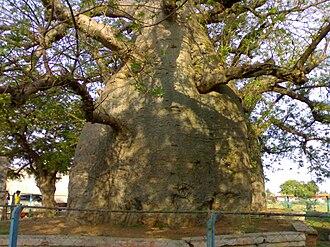 Savanur - Image: Savanur Baobad 06052007321