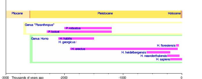 Homo erectus - Wikipedia