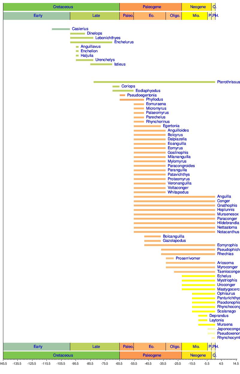 eel wikipedia