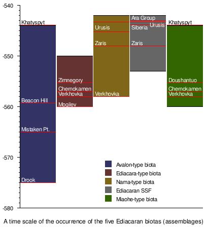 templatesub biota graphical timeline