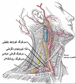 Thyrocervical trunk Persian.jpg