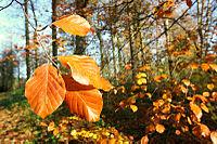 برگ درختان در پاییز