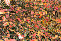 Autumn leaves 2.jpg