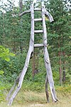 Ladder by David Nash.JPG