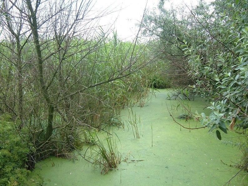 Mayaki swamp