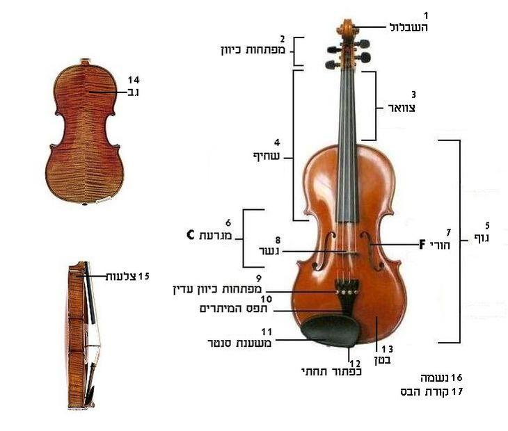 ViolinStructure.JPG