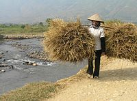 Vietnam tribe.JPG