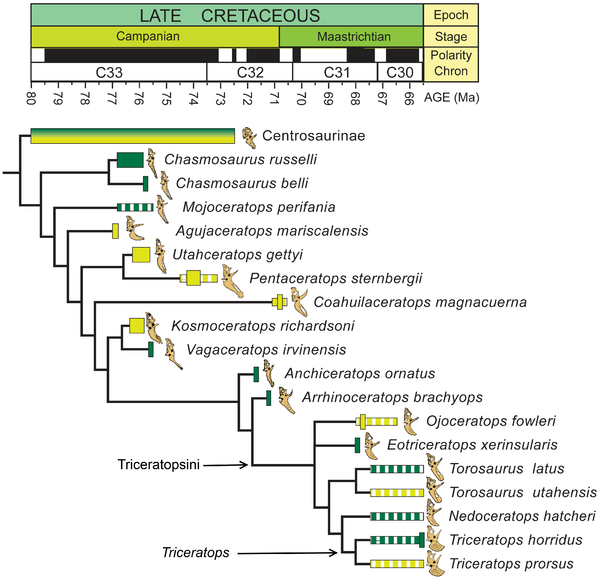 Phylogenetic relationships of Utahceratops gettyi and Kosmoceratops richardsoni within Ceratopsidae-Triceratops1.png