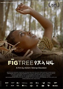 Fig Tree Film.jpg