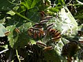 Caterpillars-NZ001.jpg