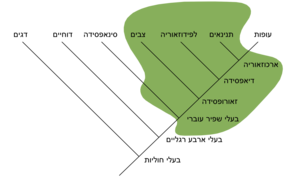 Traditional Reptilia Wikipedia Hebrew Version.png