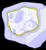 Stanična membrana