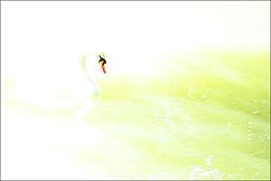 Fotografija - povijest i tehnike 250px-High_key_swan