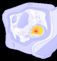 Stanična jezgra