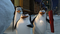 Madagascar Penguins.PNG