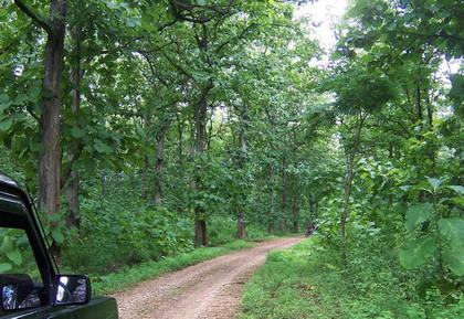Hutan jati - Wikipedia bahasa Indonesia, ensiklopedia bebas
