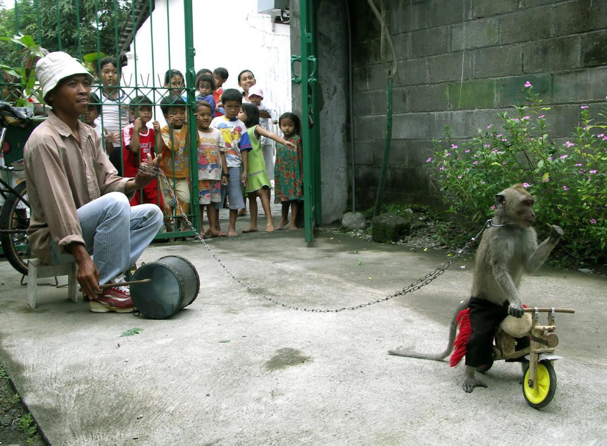 Topeng monyet - Wikipedia bahasa Indonesia, ensiklopedia bebas