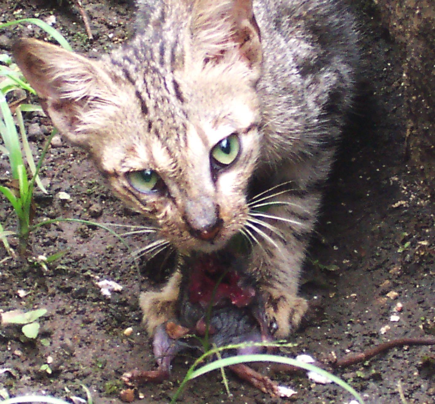 Kucing Yuli Irawati Hurairah