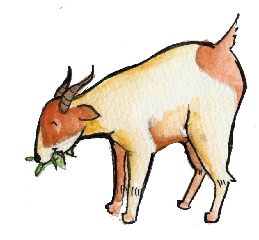 Kambing Jpg | berkas kambing jpg wikipedia bahasa indonesia