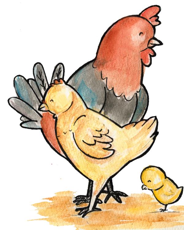 78 Gambar Ayam Anak Kekinian
