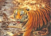 Taman Safari Indonesia 235