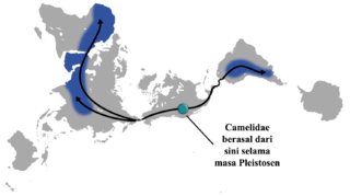 Warna Biru Menunjukkan Persebaran Camelidae, Sedangkan Garis Hitam Merupakan Rute Migrasi Sebelumnya.