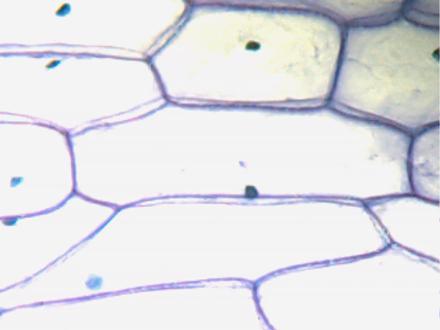 Struktur Gambar Sel Tumbuhan