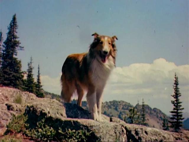 Torna a casa, Lassie! - Wikipedia Bruce Willis