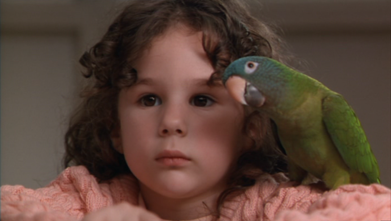 Paulie - Il pappagallo che parlava troppo - Wikiwand
