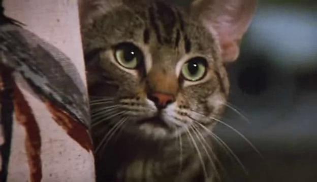 L'occhio del gatto - W...