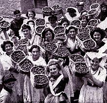 Gruppo di fragolare nel 1939