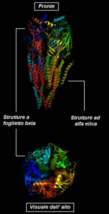 wiki nicotinic acetylcholine receptor