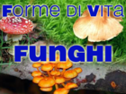 Logo funghi.png