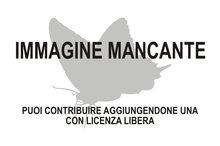 Immagine di Pieris angelika mancante