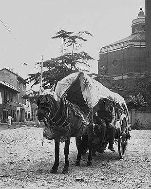 Ombrelloni Per Ambulanti Cisa.Venditore Ambulante Wikipedia