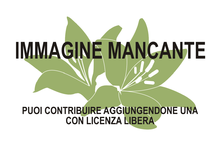 Immagine di Stephanocereus mancante